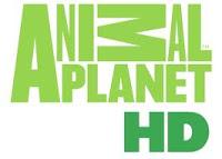 Animal Planet HD и Animal Planet обновили эфирное оформление